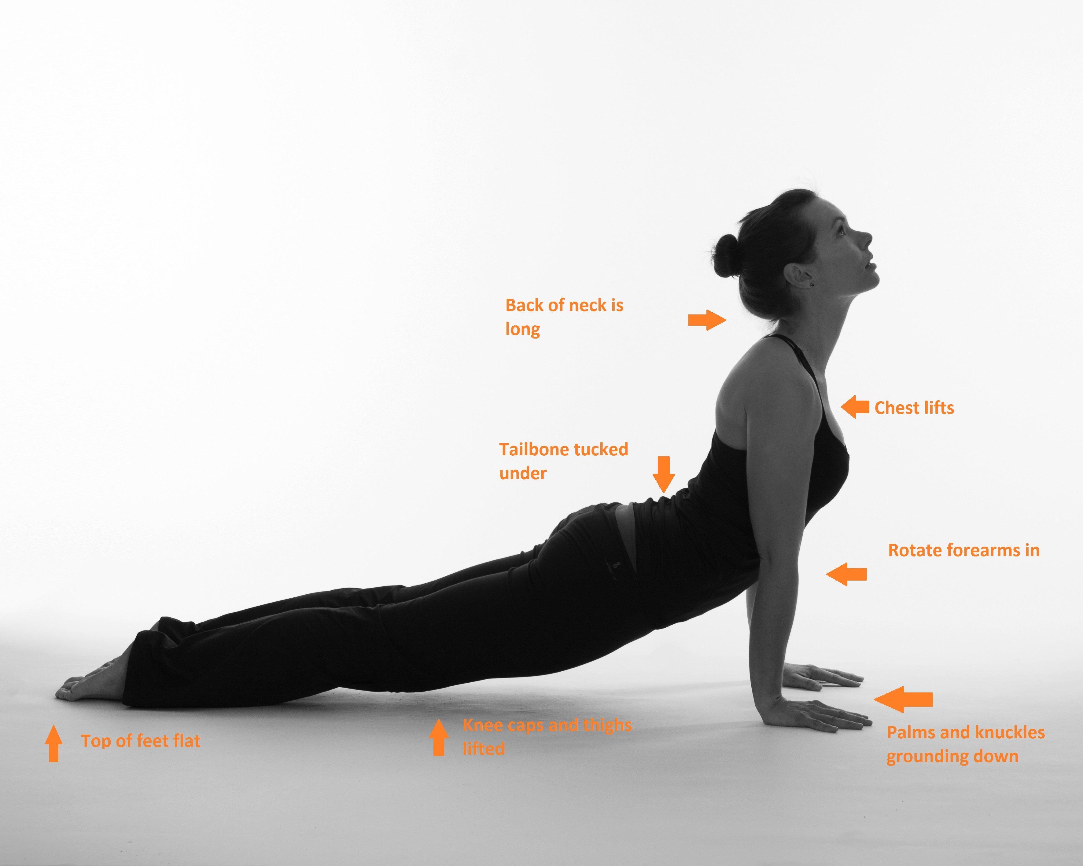 Yoga Upward Facing Dog | Cultivate Calm Yoga